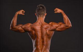 Прокачка спины в тренажёрном зале: правильный выбор упражнений
