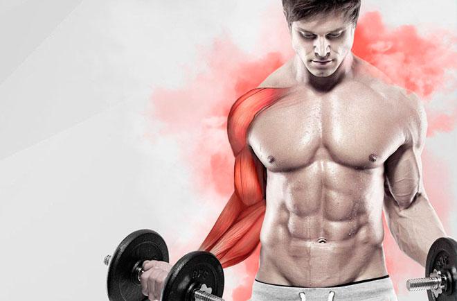 Упражнения в тренажерном зале: статодинамика